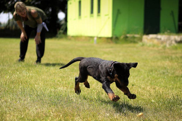 K9 TO 5 DOG CENTER - Home - K9 to 5 Dog Center